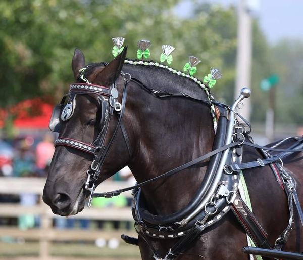 Bio 3 Strap Farm & Parade Harness