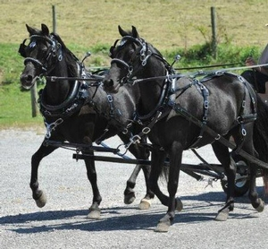 Pony & Mini Team Harness