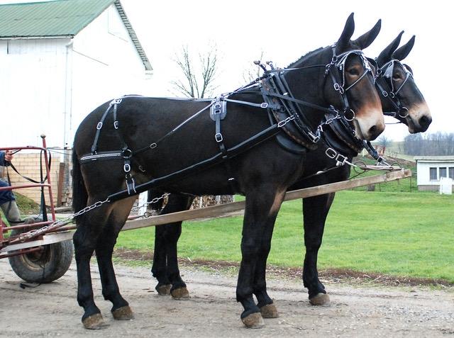 Bio Mule Harness